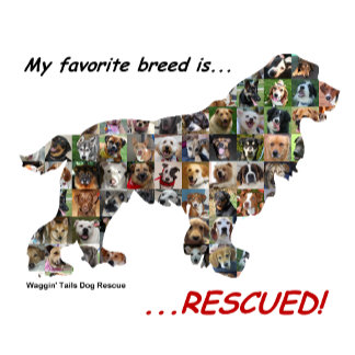 Rescued Dogs