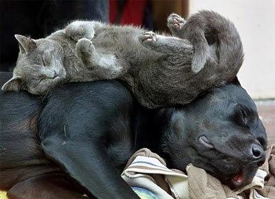 Mascotas/Pets