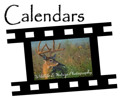 2018 Photography Calendars
