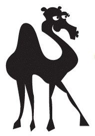 Camel only