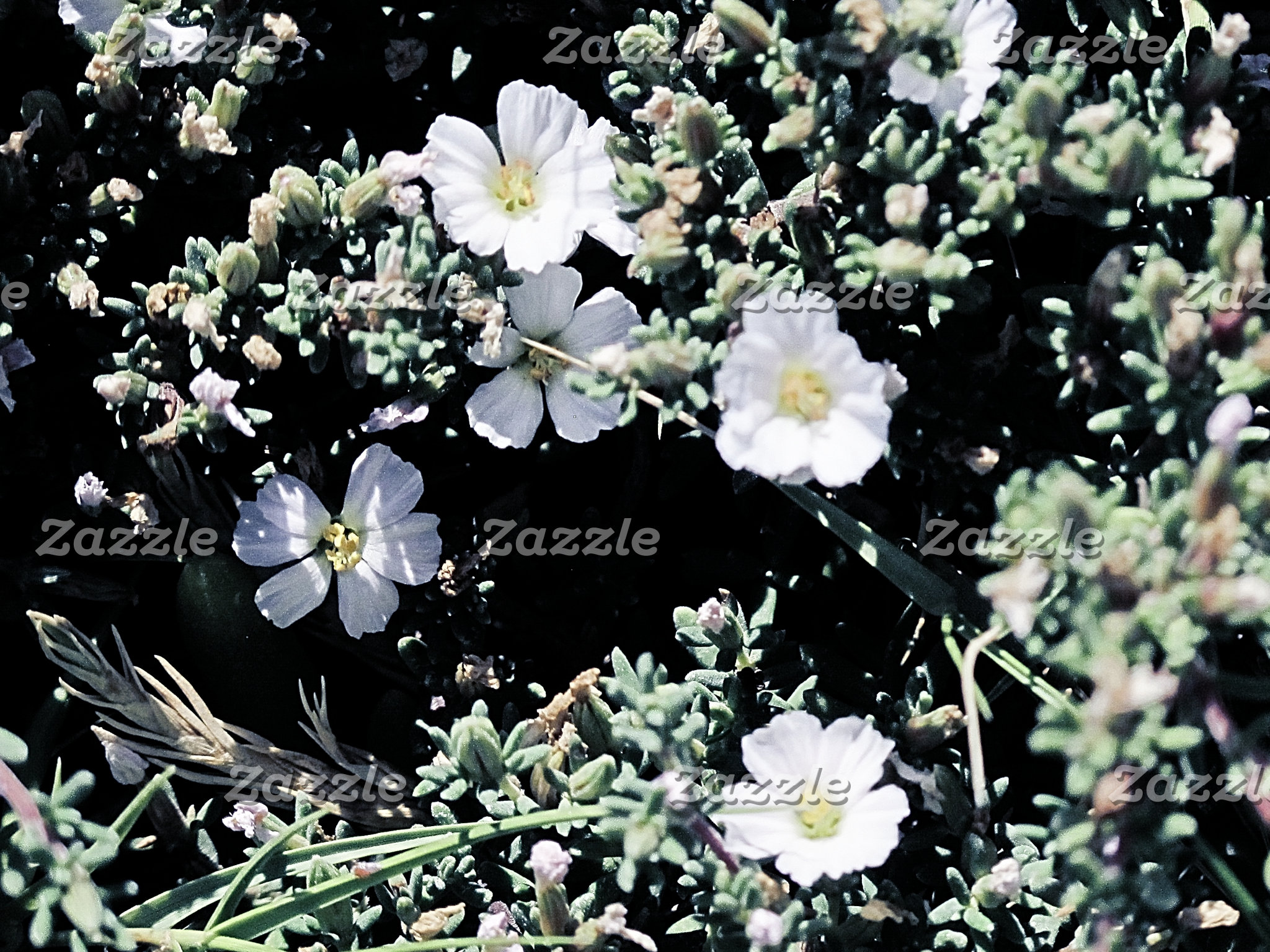 Coastal wildflowers, Australia