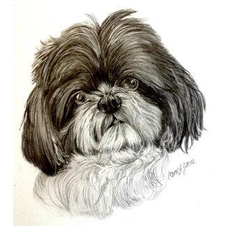 Dogs - Shih Tzu