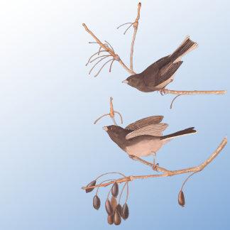Snow Birds (Plate 13)