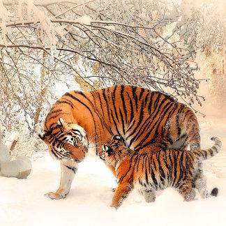 Tiger and cub - tiger