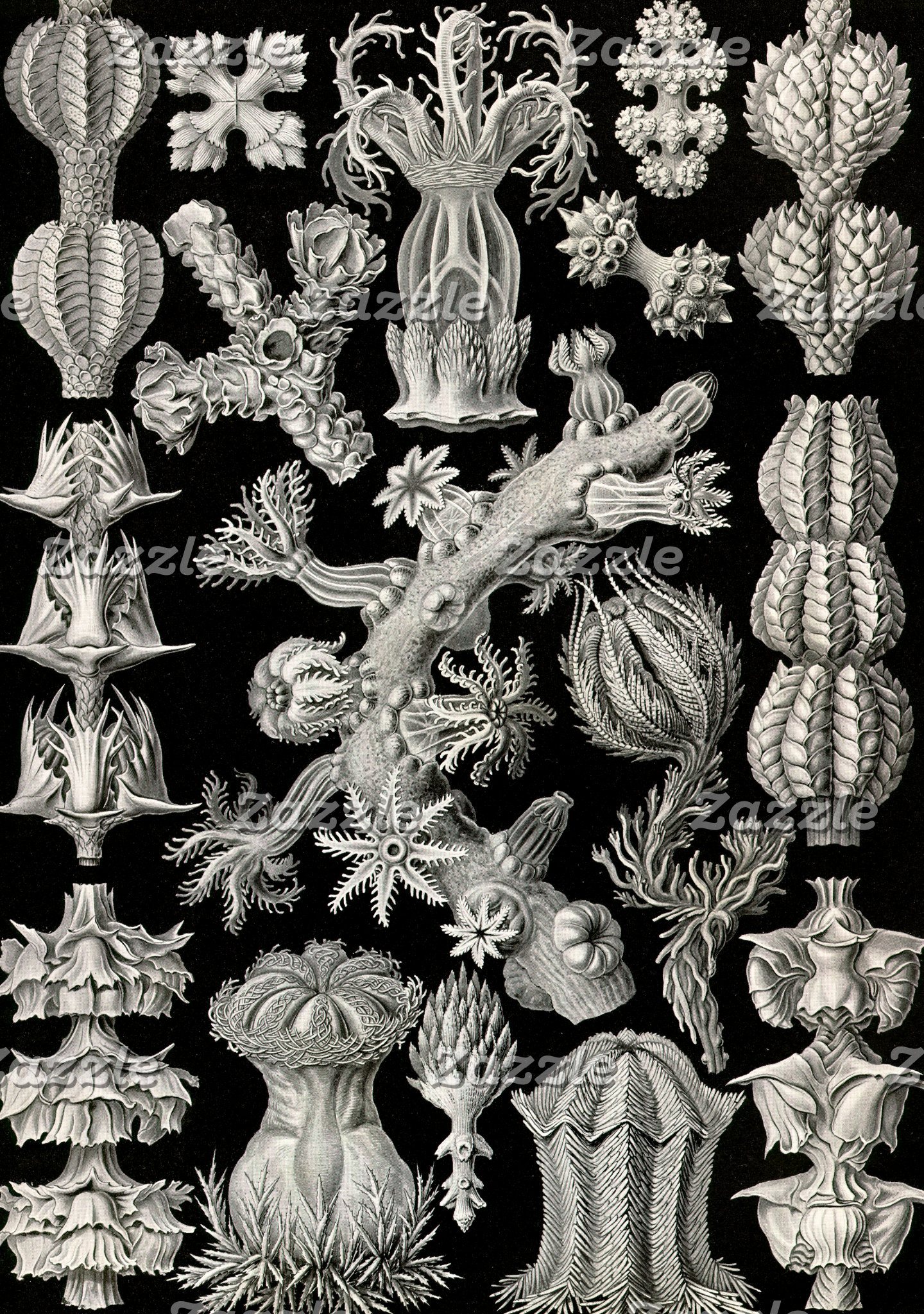 Ernst Haeckel Gorgonia