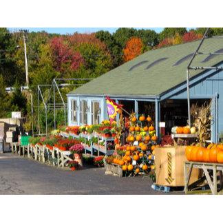 Pumpkins in Rhode Island