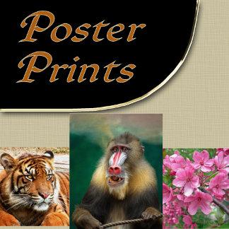 1. PRINTS - POSTERS