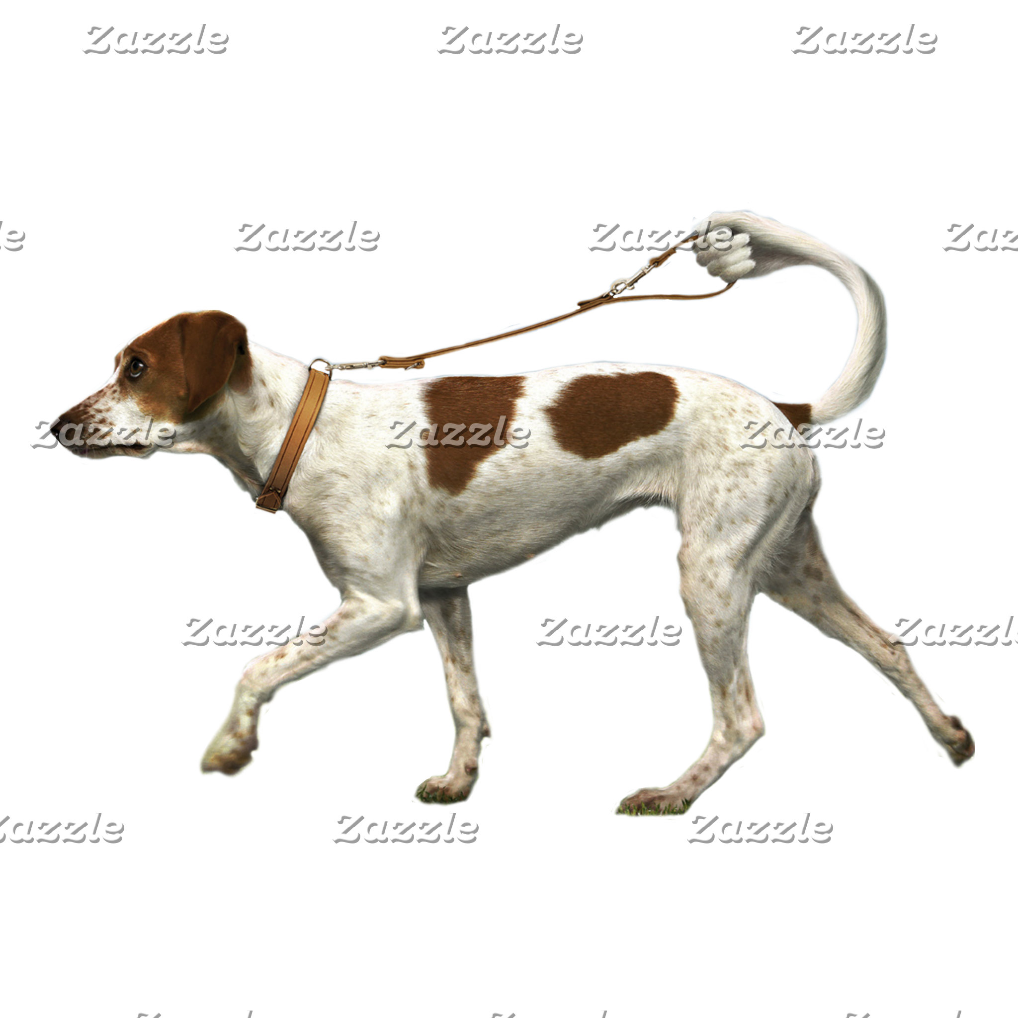 Dog walker - dog tail - braque saint germain
