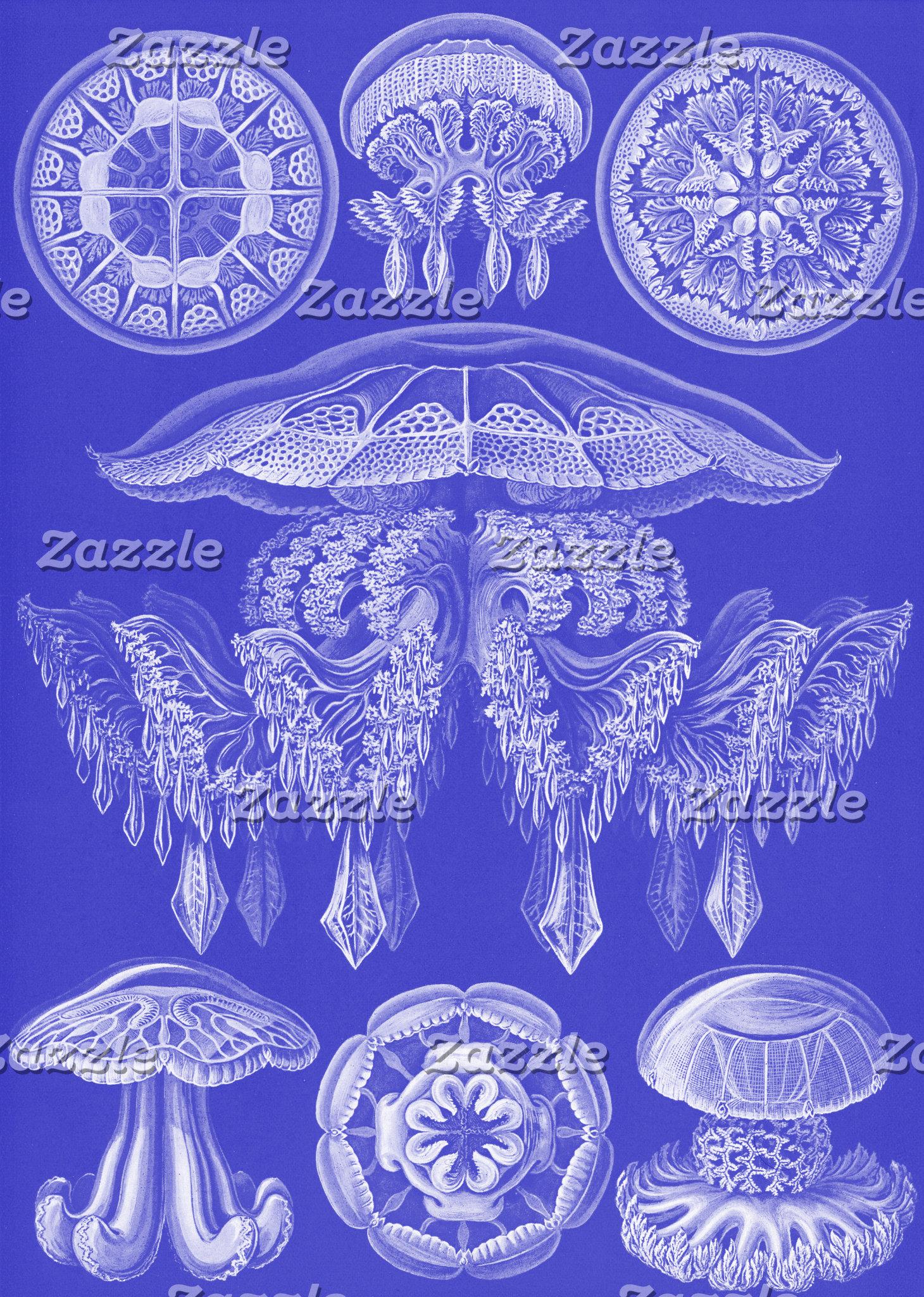 Ernst Haeckel Discomedusae III