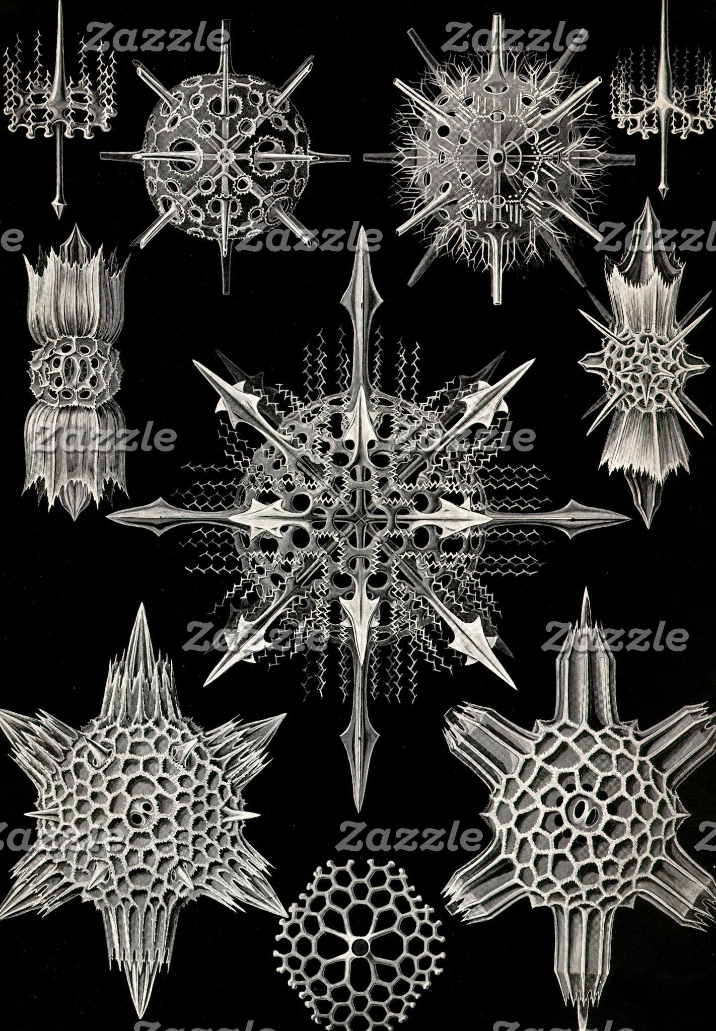 Ernst Haeckel Acanthophracta