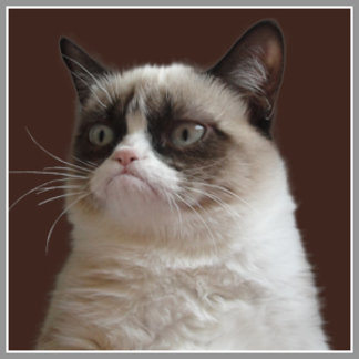 Everyday Grumpy Cat