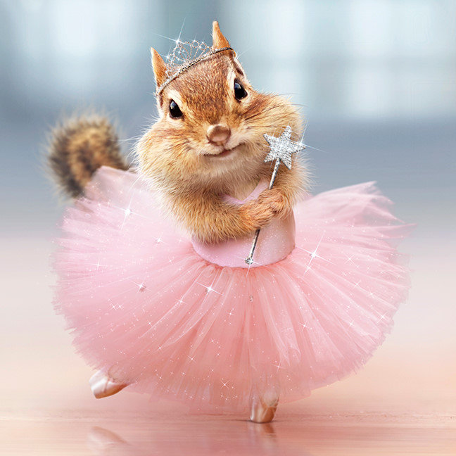 Cute Chipmunk Ballerina in tutu at Dance Studio