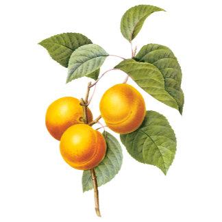Fruit and Floral Botanical Art