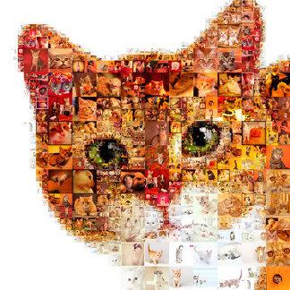 Cat - cat collage
