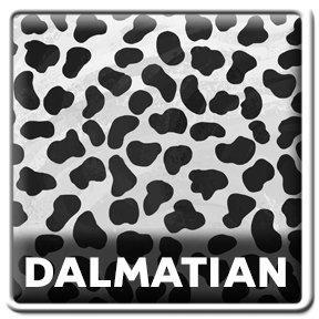 Wild Me Dalmatian