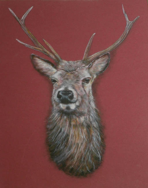 Fine Art Red Deer Stag