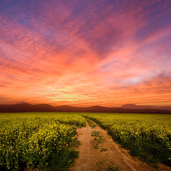 Brilliant Sunset Over Farmland