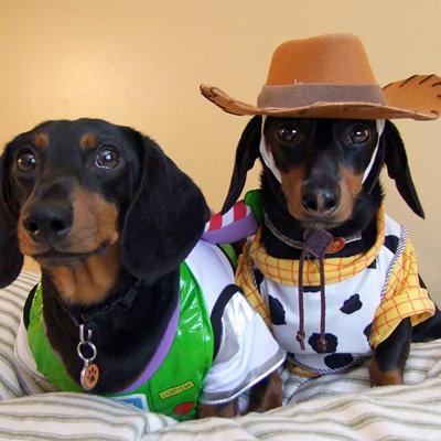 Funny Dachshund - dog cowboy