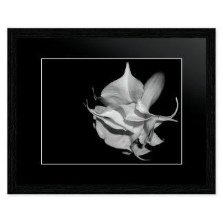 schwarzweiss / black and white