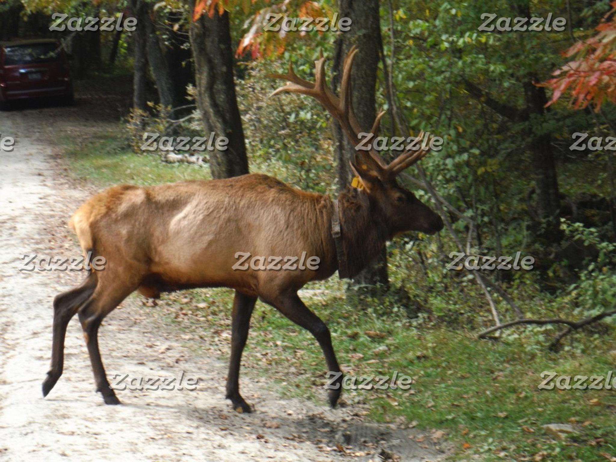 Big Bull Elk with Large Antler
