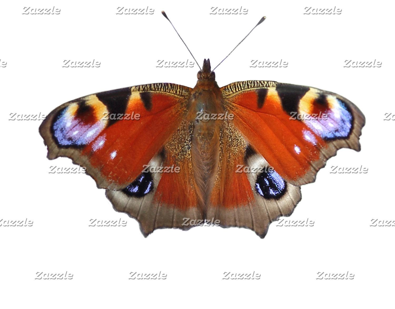 peacock butterfly wings