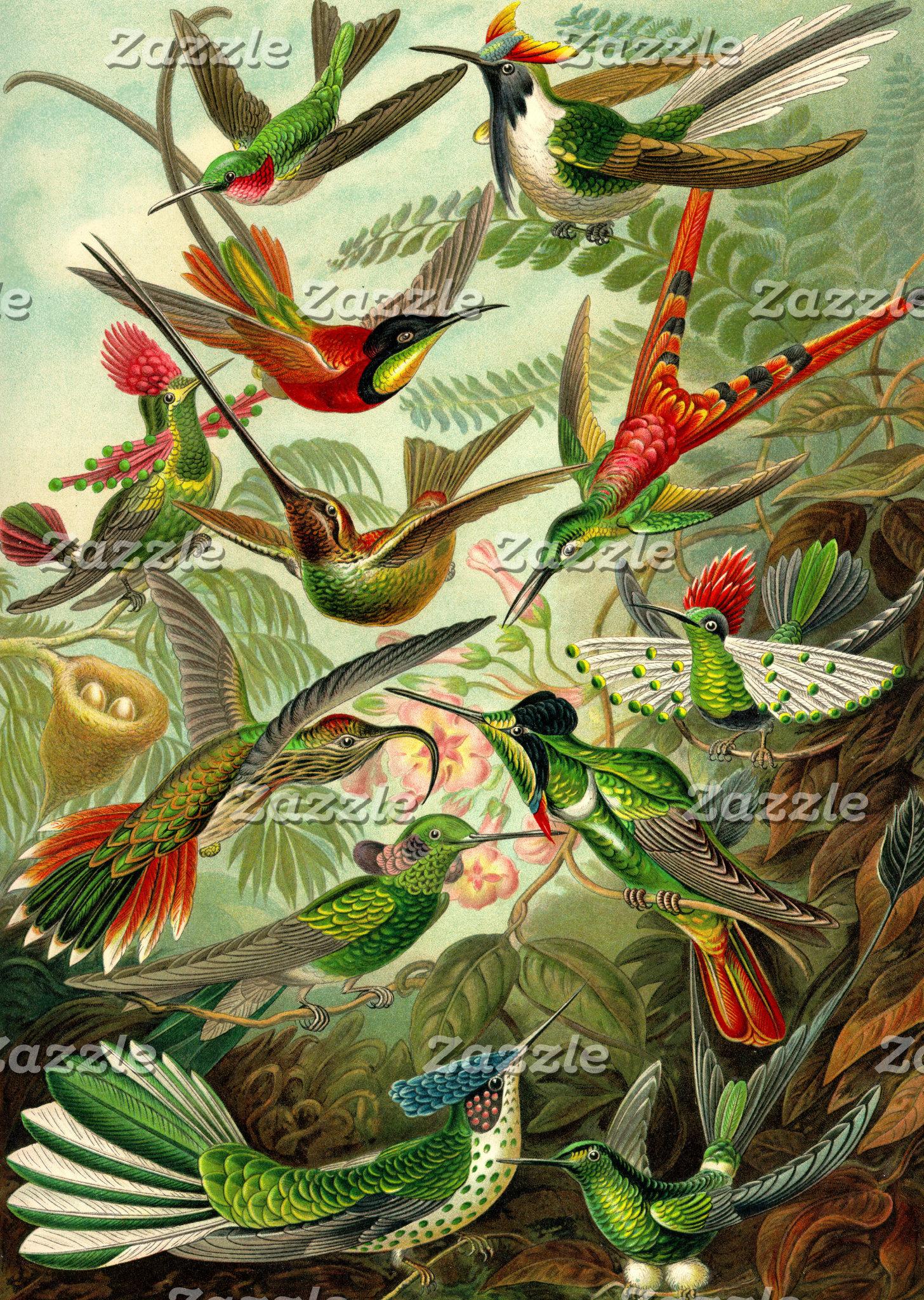 Ernst Haeckel Trochilidae Hummingbirds