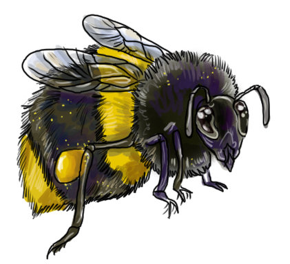 Bees and Insects