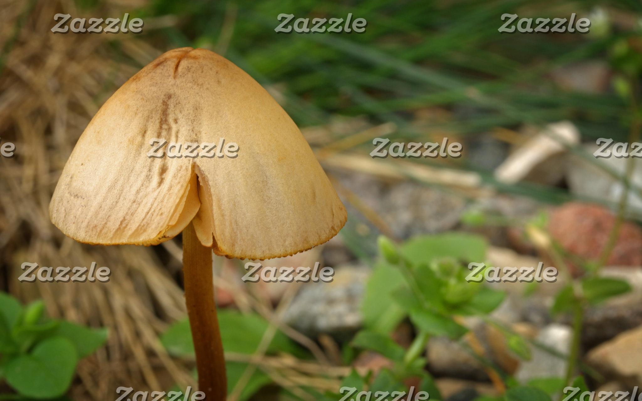 Alone Mushroom