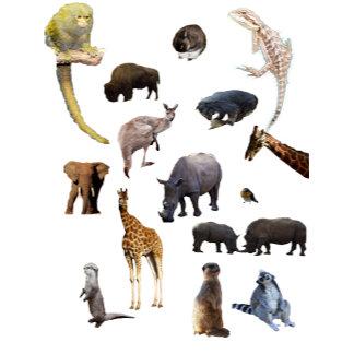 Animals, Wildlife, Meerkats, Horses, Giraffe,Otter