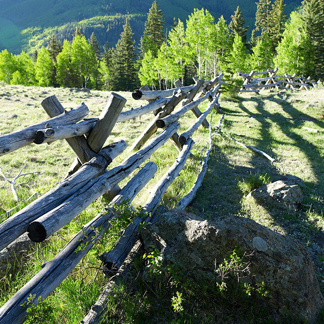 Wooden Fenceline