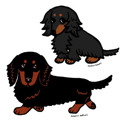 Black and Tan Long Haired Dachshund
