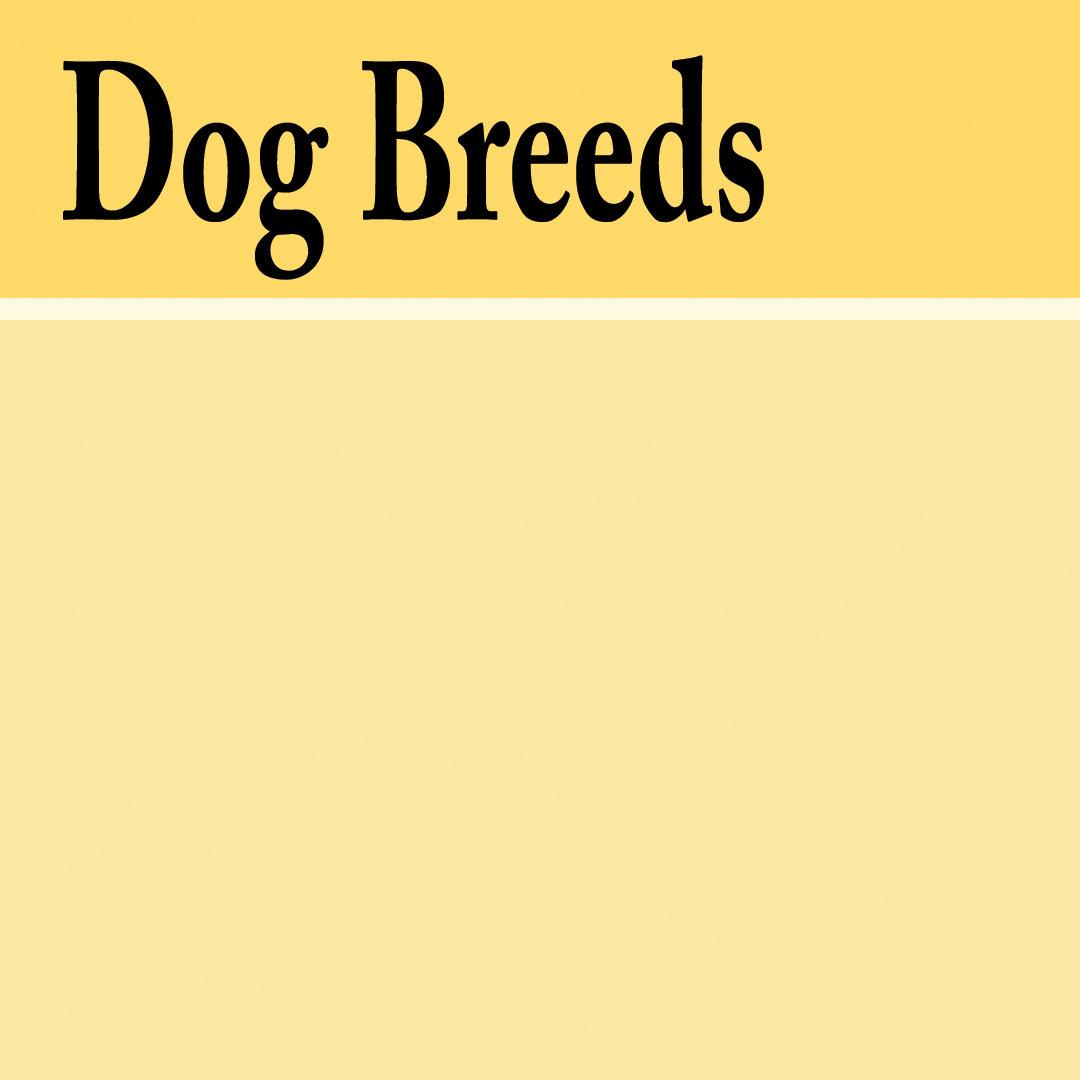 . DOG BREEDS