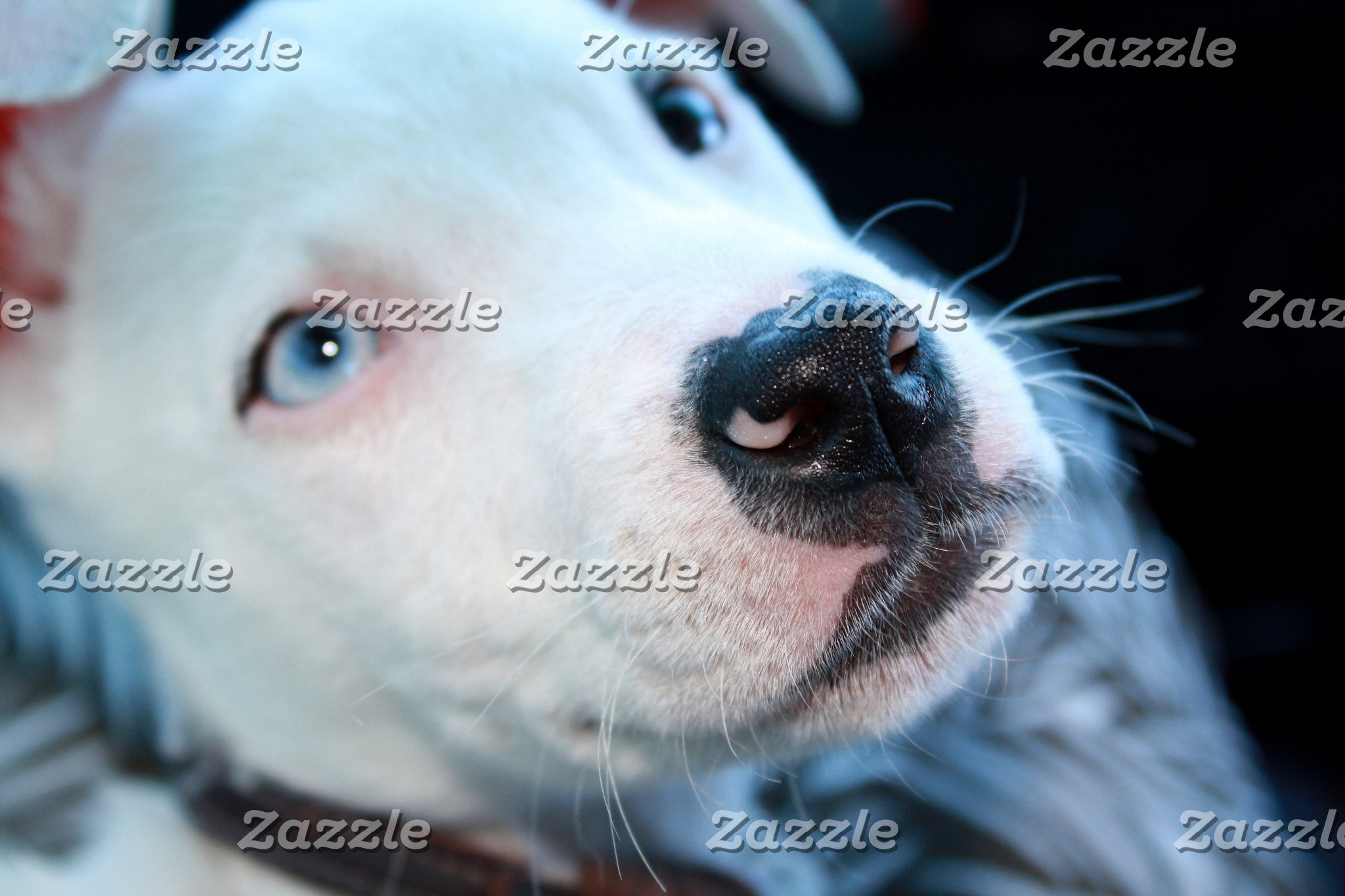 White Pitbull Design