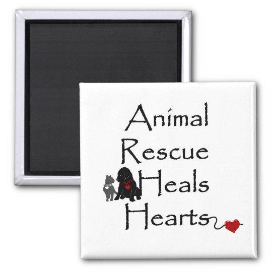 Animal Rescue Heals Hearts