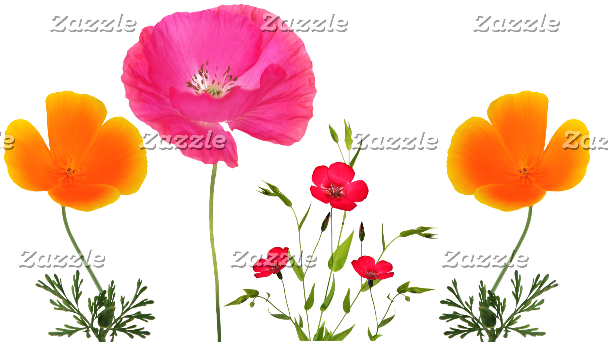 flowers against a white background
