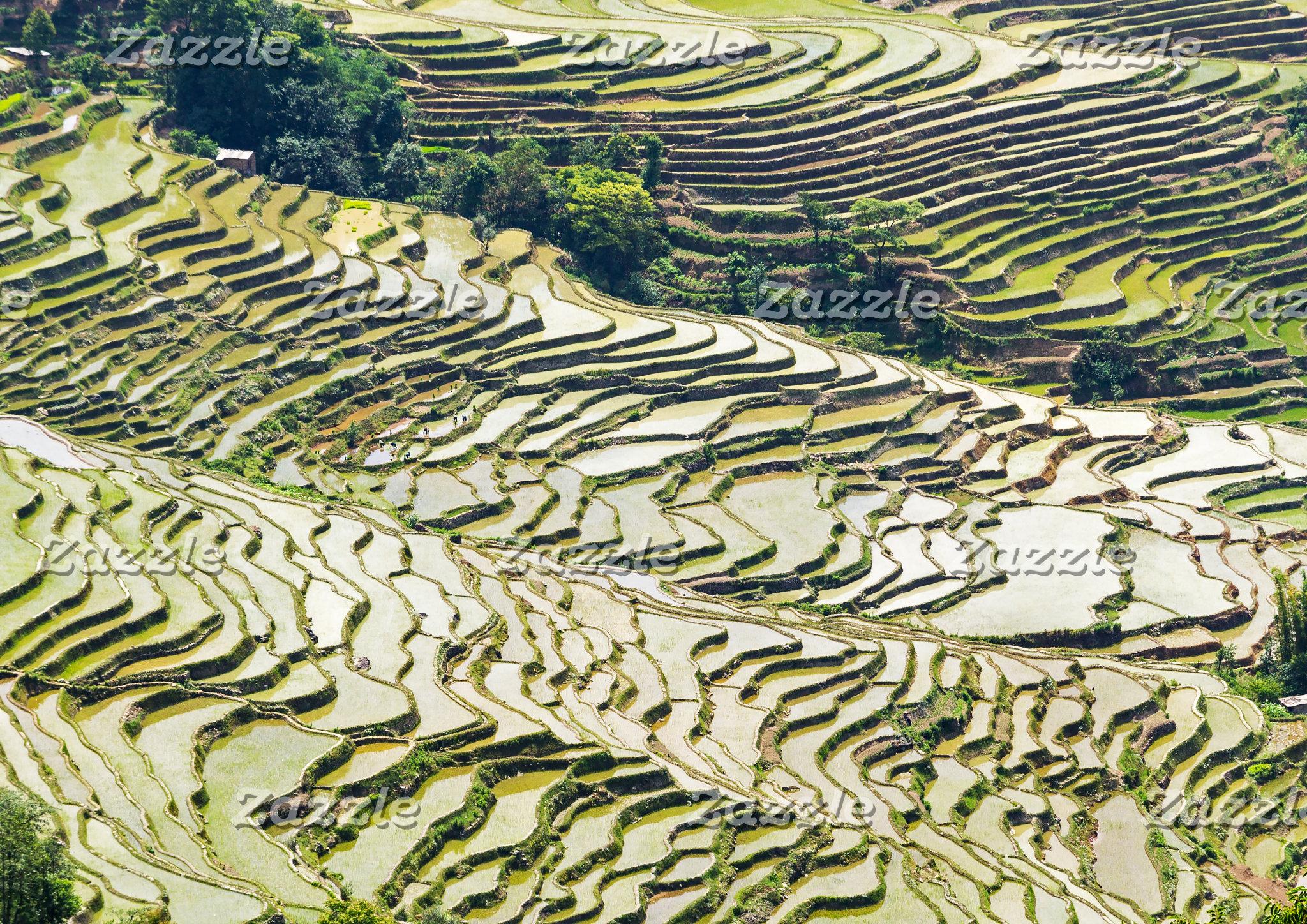 China - Yunnan