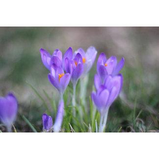 Springtime blossoms