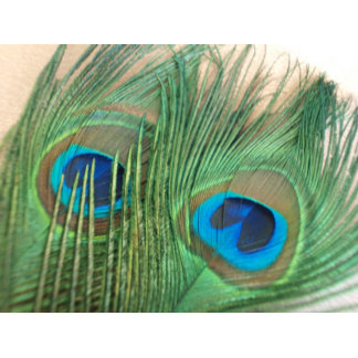 Gold Peacock Feather