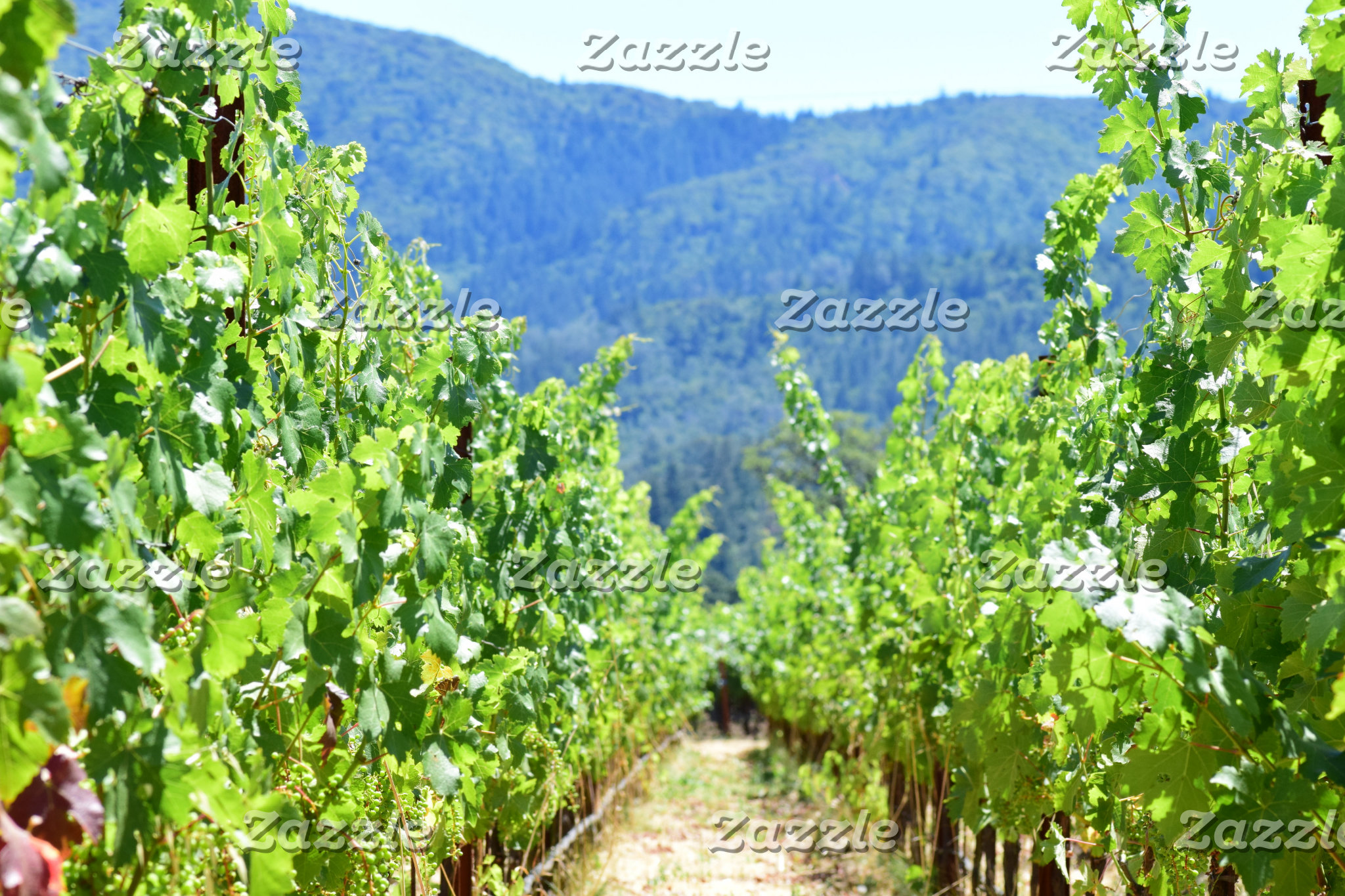 Wine & Vineyards