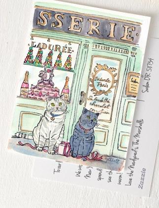 Katzen Postkarten