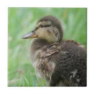 Sweet little duckling fliese