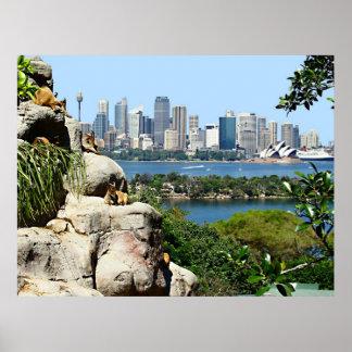 Sydney-Hafen vom Zoo Poster