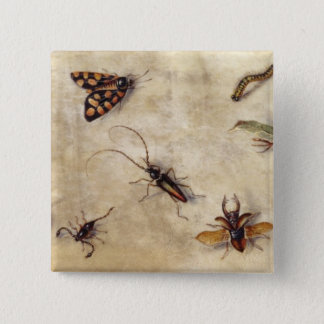 T31567 eine Studie der verschiedenen Insekten, der Quadratischer Button 5,1 Cm