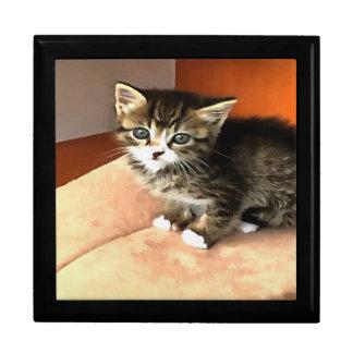 Tabby-Kätzchen genanntes Fräulein Pip Squeak Geschenkbox