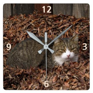 Tabby-Katze im Herbst verlässt Uhr
