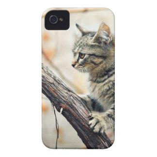 Tabby-Katze klettert Herbst-Baum Case-Mate iPhone 4 Hülle