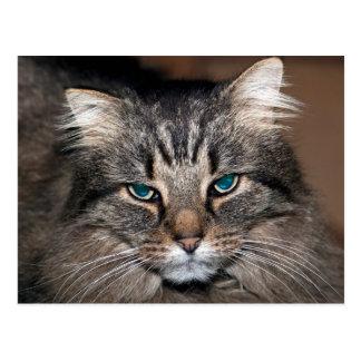 Tabby-Katze Postkarte