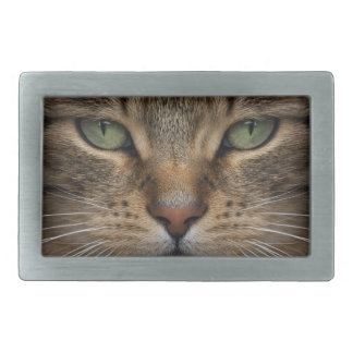 Tabby-Katzen-Gesicht Rect Gürtelschnalle