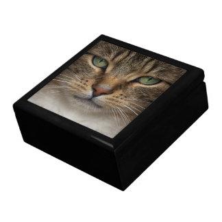 Tabby-Katzen-Gesichttrinket-Kasten Schmuckschachtel