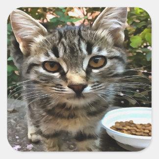 Tabby-Katzen-Kätzchen, das Blickkontakt aufnimmt Quadratischer Aufkleber